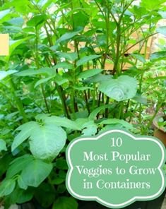 10 Most Popular Vegetables to Grow in Containers | Container Gardening