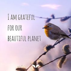 Sometimes you may feel like you don't have enough to be grateful for. During those times it's important for you to make an effort to be grateful even for the opportunity to live another day. Share this with your friends and loved ones and let them know you are grateful :)