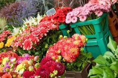 rezany kvetiny http://kvetinyvelkoobchod.cz/produkty-2/