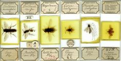 Victorian Glass Microscope Slides of Insects. Circa Mid to Late-19th Century.