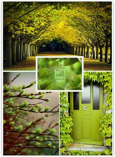 Art Symphony: Pantone 2017 Color of the Year - Greenery