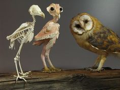 owl without feathers - Google Search