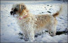 Animals in Deventer, Netherlands (zus playing snow) - a photo by Harryanne