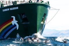 Greenpeace New Zealand took this photo in the Cook Strait, near Antarctica, where the Rainbow Warrior was surrounded by hundreds and hundreds of dolphins, for well over an hour.    Share this photo as a reminder that we all share the same beautiful world.    Photo: © Greenpeace / Marple