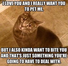 I love you and I really want you to pet me. But I also kinda want to bite you and that's just something you're going to have to deal with.  HAHA!