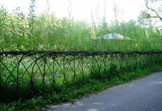Living Fences – How To Make A Living Fence For Your Garden… | http://www.ecosnippets.com/diy/how-to-make-a-living-fence/