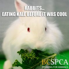 Caregiver, Surrey, Pretty Cool, Rabbits, Pet Care, Pet Adoption, Behavior, Eve, Cool Stuff