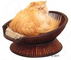 Atmosphere Pet Chair