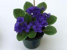 "Mickey Mouse • H. Inpijn • ""Double dark blue.  Dark green, pointed/red back. Miniature"" • African Violet Society of Canada - Gallery - Mini African Violets"