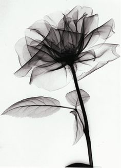 x-ray flowers,  amazing