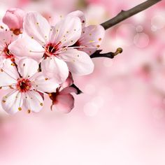 Spring flowers wallpaper flower wallpaper pinterest spring the more intensely we feel about an idea or a goal the more assuredly the idea buried deep in our mightylinksfo