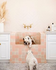 Pets! - Park and Oak Interior Design