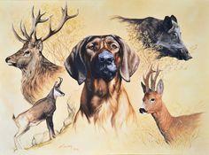 galerie des peintures, peinture animalière, dessin animaliers, illustration animalière, - Site internet du peintre, imagier et illustrateur Olivier Claudon