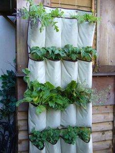 Keep plants healthy and out of animals' reach by planting them in hanging shoe organizer pockets mounted to a fence.