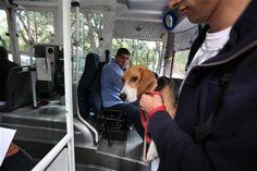 La línea 19 propone que los pasajeros puedan viajar con sus mascotas