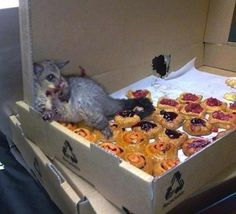 haaa, this little fella found his way into a bakery and ate himself silly lol.  It's gold!