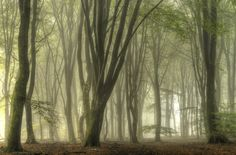 Foggy forest by Jan Paul  Kraaij on 500px