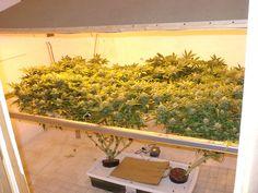 Soil vs. Hydroponics - East Coast Marijuana