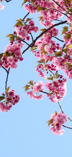 Spring Wallpapers for iPhone - HD Quality Spring Backgrounds [Free Download]