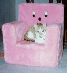 """babydearr: """"Gimme that lil chair """" Miaou Miaou, Cool Stuff, Cool Cats, Cute Pictures, Hello Kitty, Weird, Cute Animals, Childhood, Creatures"""