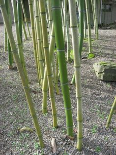 75 Best Love Of Bamboo Images Bamboo Architecture Bamboo