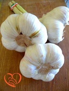 Aglio http://www.cuocaperpassione.it/foodfoolio/bf2c1f4c-9f72-6375-b10c-ff0000780917/Aglio