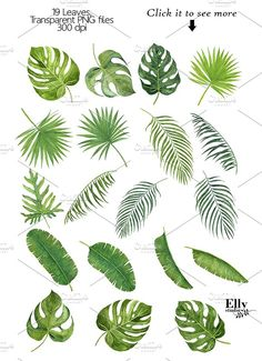 Tropical Leaves by EllyStudio on @creativemarket