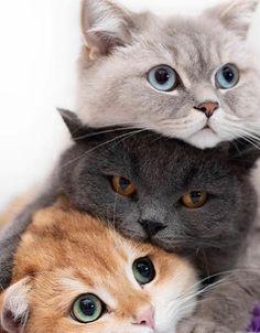 Cute Baby Cats, Cute Little Animals, Cute Cats And Kittens, Cute Funny Animals, Kittens Cutest, Happy Animals, Funny Cats, Pretty Cats, Beautiful Cats