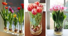 Home Hacks, Ikebana, Terrarium, Garden Design, Diy And Crafts, Glass Vase, Projects To Try, Spring, Plants