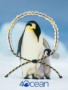 offers bracelets made from recycled materials. Every bracelet purchased funds the removal of one pound of trash from the ocean and coastlines. Cute Baby Animals, Animals And Pets, Funny Animals, 4 Oceans, Clean Ocean, Cute Birds, Animal Memes, Beautiful Birds, Animal Pictures