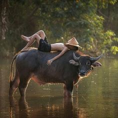 Another shot from rural Thailand. A young boy takes a break on a water buffalo Village Photography, Children Photography, Portrait Photography, Nature Photography, Photography Ideas, Kids Around The World, People Of The World, Village Kids, Foto Picture