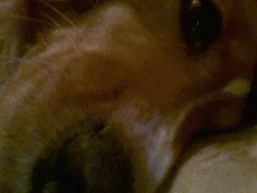 Cocker Spaniel/Galgo Kira Träumt schön, liebe Hunde… ☀ ☾ ★ Hundename: Kira / Rasse: Cocker Spaniel/Galgo      Mehr Fotos: https://magazin.dogs-2-love.com/foto/cocker-spanielgalgo-kira/ Foto, Hund, Liebe