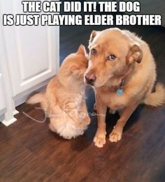 https://zh.johnnybet.com/betvictor?fancy=1#picture?id=12661 #thecatdidit #dog #playingelderbrother #funnyanimals #cutiedogo