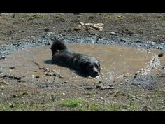 Dogs loving rain and puddles - Funny and cute dog compilation - YouTube