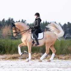 Funny Horses, Cute Horses, Pretty Horses, Horse Love, Beautiful Horses, Trail Riding Horses, Barrel Racing Horses, Horse Riding, Warmblood Horses