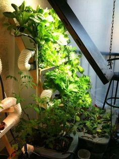 Ultimate Vertical Hydroponic Farm on the Cheap.. will have to give away crops #verticalfarming