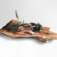 Driftwood, Diorama, Succulents, Plants, Cacti, Party Ideas, Fall, Fairy Gardening, Gardens