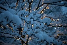 lighted branches in snow