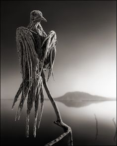 Petrified creatures from Across the Ravaged Land by Nick Brandt.