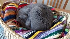 Caminha é o enfeite de centro de mesa, com um gatinho bem dorminhoco dentro!