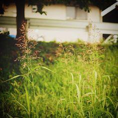 散歩道 秋を感じて 今日も元気に楽しく  #秋 #散歩 #道草 #fujifilm #xe2 #SINTO