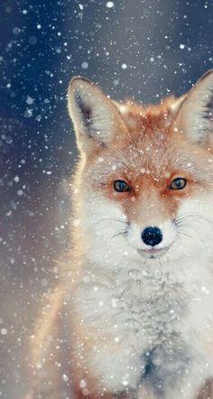 Fox makeup/hair idea