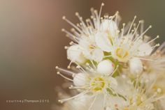 Macro flowers/ soft edit/ flower photography by Courtney Thompson