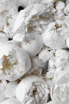 Flowers bouquet floral arrangements peonies New ideas Peonies Wallpaper, Rose Wallpaper, Wallpaper Backgrounds, White Flower Wallpaper, Iphone Wallpapers, Scenery Wallpaper, Landscape Wallpaper, Animal Wallpaper, Colorful Wallpaper