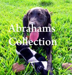 Animal Photography by AbrahamsCollection on Etsy, $9.00 PRINTS COMING SOON!!