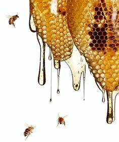🐝Nectar of the gods🐝 Bee Pictures, I Love Bees, Bee Tattoo, Bee Art, Liquid Gold, Save The Bees, Bee Happy, Milk And Honey, Bees Knees