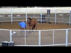 Monty Roberts - 'Dirty Starter' Day 1 - Horseworld Sydney. - YouTube