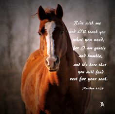 My horse Foster. I love this cowboy bible verse