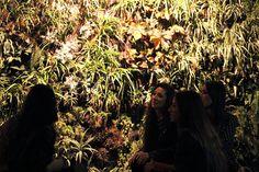 Jardin Vegetal en Club Shampoo  Diseñador Ignacio Stesina