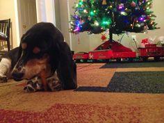 scenes of Christmas 2014